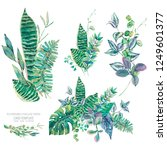vector set of green exotic... | Shutterstock .eps vector #1249601377