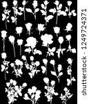 illustration with white roses... | Shutterstock .eps vector #1249724371
