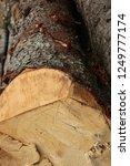 pine brown tough bark felled... | Shutterstock . vector #1249777174