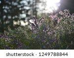 flower garden and light | Shutterstock . vector #1249788844