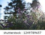 flower garden and light | Shutterstock . vector #1249789657