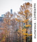 pine trees changing color from... | Shutterstock . vector #1249806994