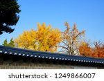 maple trees over the long wall... | Shutterstock . vector #1249866007