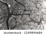 monochromatic image of... | Shutterstock . vector #1249894684