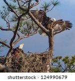 American Bald Eagle Parents On...
