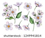 set of watercolor flowers... | Shutterstock . vector #1249941814