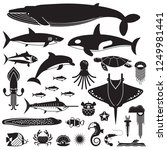 underwater animals and sea... | Shutterstock . vector #1249981441