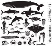 underwater animals and sea... | Shutterstock . vector #1249981441