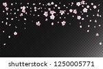 nice sakura blossom isolated... | Shutterstock .eps vector #1250005771