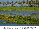 beautiful bird on backwater... | Shutterstock . vector #1250050537