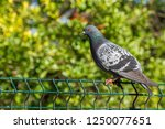 photo of a bird with cold... | Shutterstock . vector #1250077651