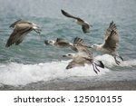 seagull flying above the sea | Shutterstock . vector #125010155