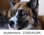 portrait of a big brown dog... | Shutterstock . vector #1250141194