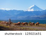 gauchos and herd of cows on the ... | Shutterstock . vector #125021651