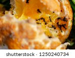 tangerines eaten by black ants | Shutterstock . vector #1250240734