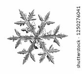 snowflake isolated on white... | Shutterstock .eps vector #1250276041