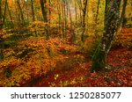 the colorful beech forest... | Shutterstock . vector #1250285077