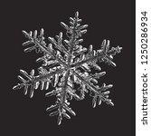 white snowflake isolated on... | Shutterstock .eps vector #1250286934