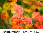 abstract background of colorful ...   Shutterstock . vector #1250298067