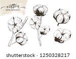 set of hand drawn cotton... | Shutterstock .eps vector #1250328217