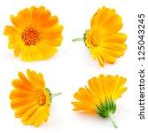 Stock photo marigold flowers calendula flowers isolated on white set 125043245