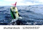 Mahi Mahi Sport Fishing Costa...