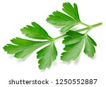 parsley isolated on white... | Shutterstock . vector #1250552887