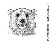 bear head. vintage black... | Shutterstock .eps vector #1250688124