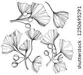vector isolated ginkgo... | Shutterstock .eps vector #1250695291