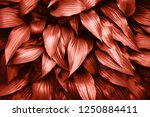 living coral background made of ... | Shutterstock . vector #1250884411