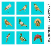 set of vector illustration in... | Shutterstock .eps vector #1250899327
