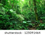 jungle | Shutterstock . vector #125091464