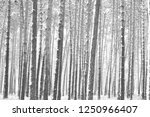 black and white photo of winter ...   Shutterstock . vector #1250966407
