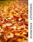 autumn leaf carpet. photograph...   Shutterstock . vector #1251053641