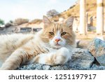 cat relaxed on ruins of ephesus ...   Shutterstock . vector #1251197917