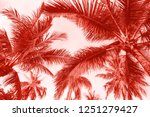 branches of coconut palms under ... | Shutterstock . vector #1251279427