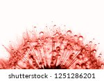 dandelion in the dew drops on... | Shutterstock . vector #1251286201