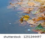 fallen from a tree leaves on in ... | Shutterstock . vector #1251344497