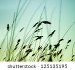 Variegated Structures Of...