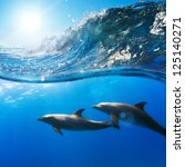 two beautiful dolphins swimming ... | Shutterstock . vector #125140271