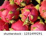 fresh dragon fruit organic in... | Shutterstock . vector #1251499291