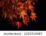 autumn vibes in kansai  kyoto... | Shutterstock . vector #1251513487