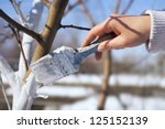 Spring Protection Of Fruit...