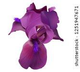 iris flower. hand drawn...   Shutterstock .eps vector #1251947671