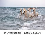 running horses on water  | Shutterstock . vector #1251951607