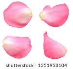Stock photo pink rose petals background 1251953104