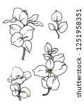 white jasmine exotic flower set.... | Shutterstock . vector #1251958351