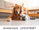 golden hound and british short... | Shutterstock . vector #1252278487