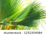 tropical rain  season of...   Shutterstock . vector #1252354084