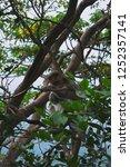 a cute monkey lives in a... | Shutterstock . vector #1252357141